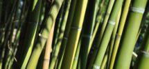 matelas-bambou