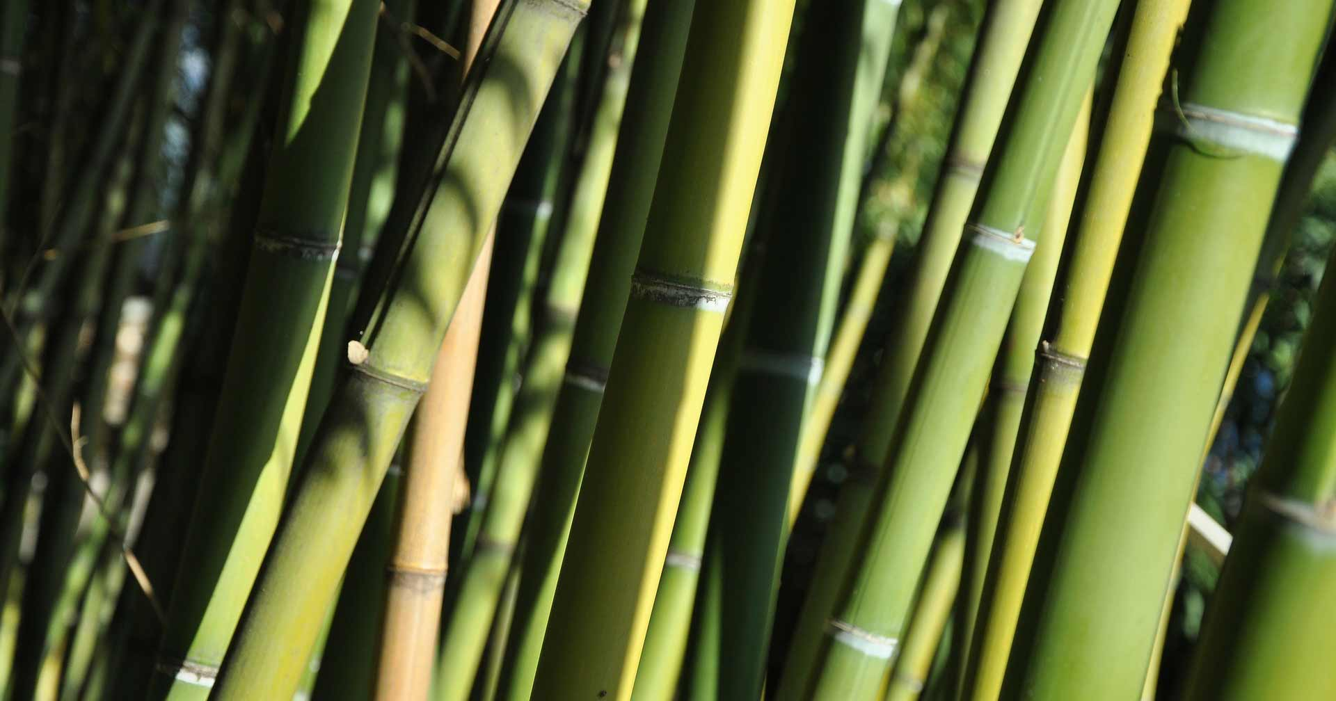 bambou ecologie matelas