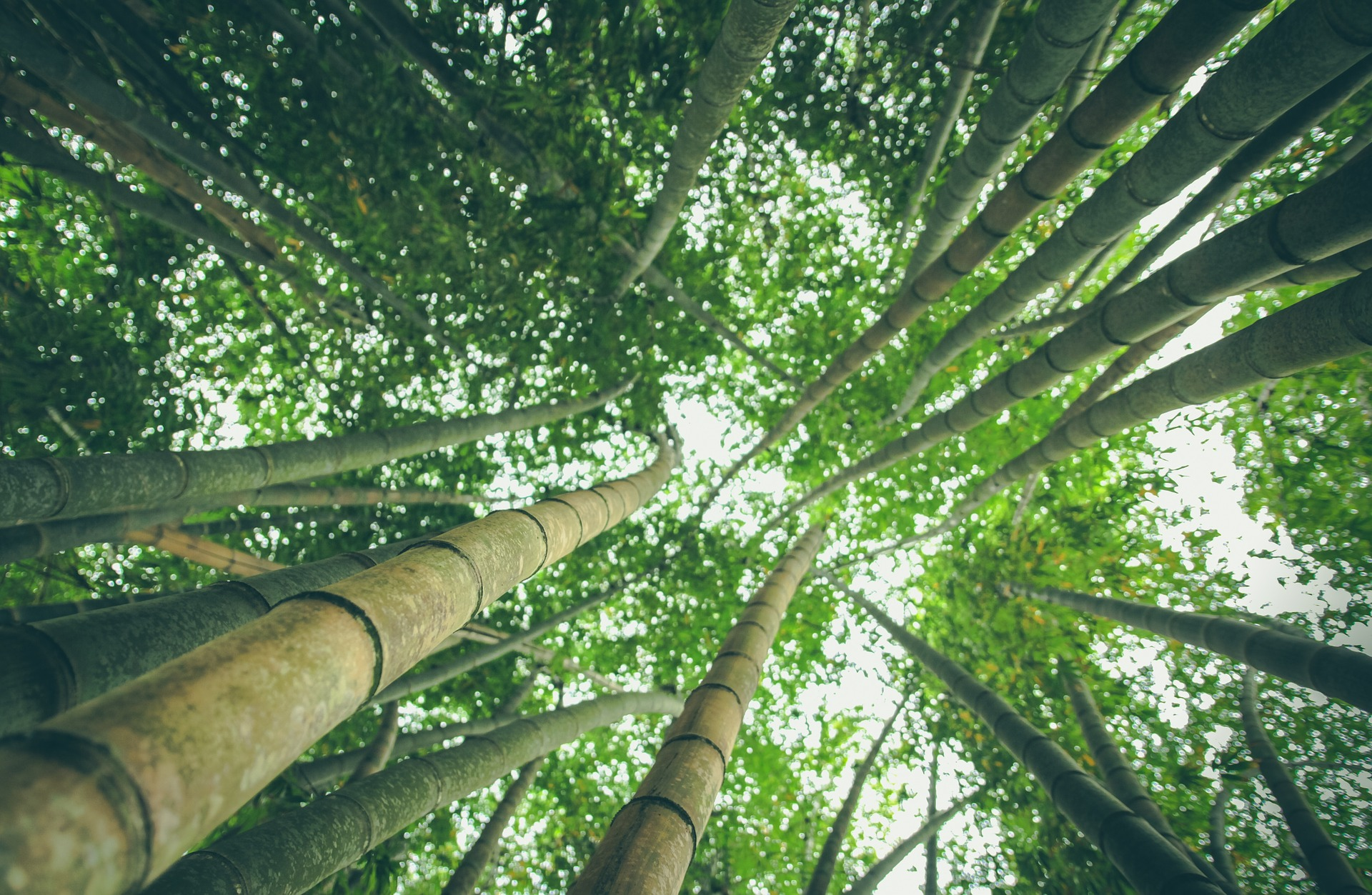 bambou fibre bien etre