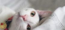 Dormir_Avec_Animal_10
